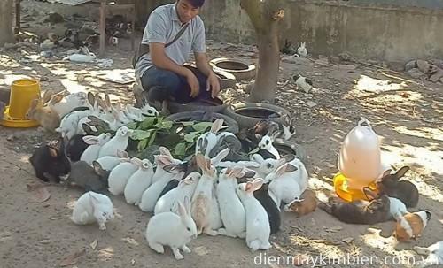 Kỹ thuật nuôi thỏ thả vườn